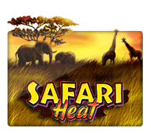 Safari Heat joker gaming
